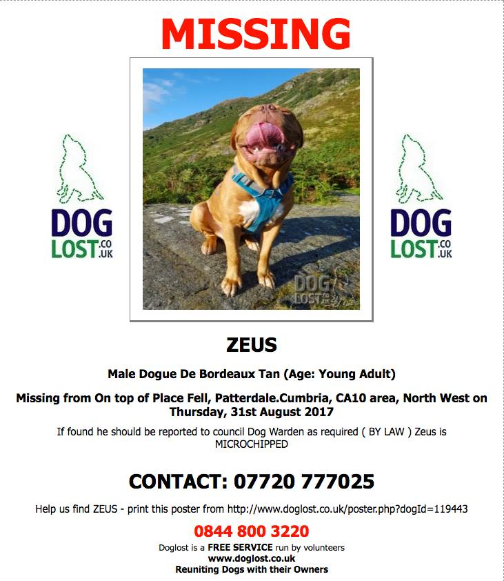 Poster of Zeus the Dogue de Bordeaux - missing on Place Fell