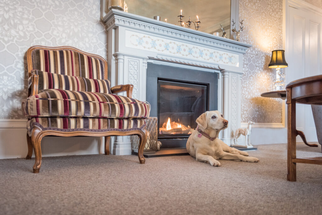White labrador dog lying peeacefully in front of ornately painted fireplace